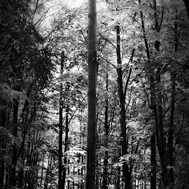 I am here by Tamara Jančić - Landscapes Forests