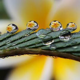 by Saefull Regina - Nature Up Close Natural Waterdrops