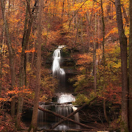 Tioga Falls in Autumn by Nathan Pentecost - Landscapes Forests ( water, waterfalls, autumn, fall, trees, forest, kentucky )