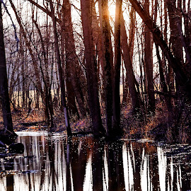 Deep and Dark by Sandra Hilton Wagner - Landscapes Forests ( water, stream, sunset, dark, reflections, trees, forest )