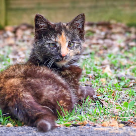 Feral kitten. by Andrew Lawlor - Animals - Cats Kittens