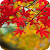 Maple Leaves Wallpaper file APK Free for PC, smart TV Download