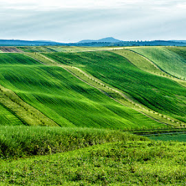 Fields by Vladimir Vocelka - Landscapes Prairies, Meadows & Fields ( green, south moravia, czech republic, spring, fields )