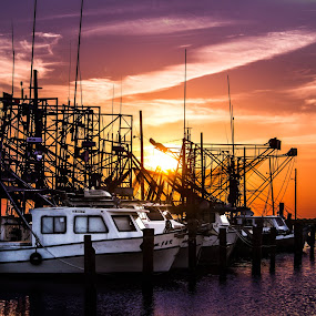 Gulf Coast fleet by Victoria Evans - Products & Objects Business Objects ( sunset, shimp boats, louisiana, buras, dock )