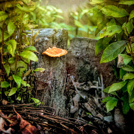 Whimsical Mushroom by Carole Pallier Cazzazsnapz - Nature Up Close Mushrooms & Fungi ( trunk, stump, fungi, art, trees, mushrooms )