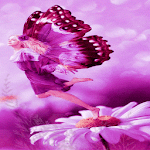 Purple Butterfly Girl LWP APK Image
