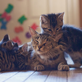 Gotcha Mommy by Catherine Trudeau - Animals - Cats Playing ( kittens )