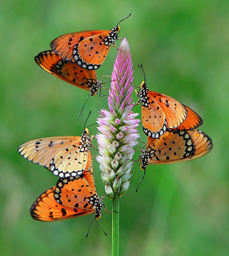 three couples by Anif Putramijaya - Animals Insects & Spiders