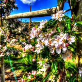 HDRi vines by Marc Girouard - Flowers Flower Buds