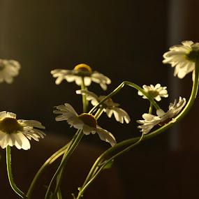 by Zenonas Meškauskas - Uncategorized All Uncategorized ( warm, yellow, evening, light )