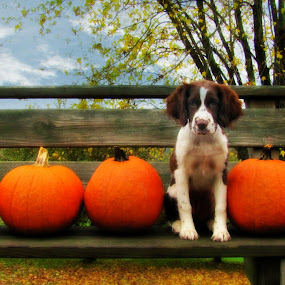 by Kirsi Bertolini - Public Holidays Thanksgiving ( pumpkin patch, pumpkin close up )
