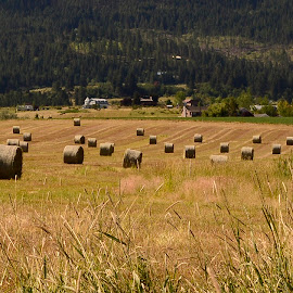 Cut hay by Denton Thaves - Landscapes Prairies, Meadows & Fields ( hay )