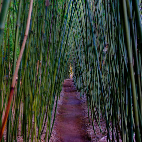 Pathway through by Petra Bensted - Nature Up Close Other plants ( bamboo, nature, jungle, path, plantation )