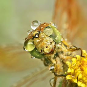Born in the rain by Alit  Apriyana - Animals Insects & Spiders