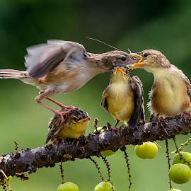 sorry kid.... by Bernard Tjandra - Animals Birds