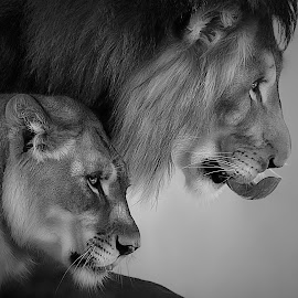 by Shawn Thomas - Black & White Animals (  )