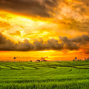 SUNSET AT RICE FIELD by Rahmad Himawan - Landscapes Prairies, Meadows & Fields ( clouds, sky, sunset, cloudy, landscapes,  )