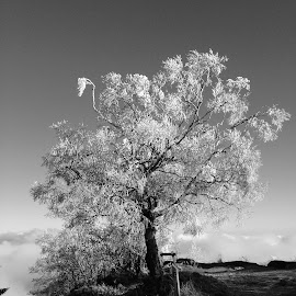 Frost tree black and white by Olivier Thomassin - Landscapes Mountains & Hills ( clouds, sky, mountain, winter, nature, pathway, tree, heaven, black and white, frost, weather )