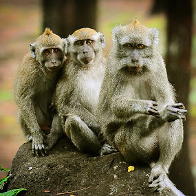 Three .... by Jeffry Sabara - Animals Other Mammals