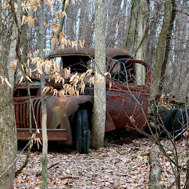 Old Banger  by MaryKathryn Zuza - Transportation Automobiles ( old, overgrown, truck, rusted, banger, woods, old truck, antique )