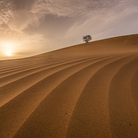 Desert Sunset by Walid Ahmad - Landscapes Deserts ( desert, sunset, uae, landscape, photography )