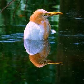 summation.... by Bikash Roy - Novices Only Wildlife (  )