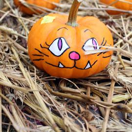 Meow by Lenora Popa - Public Holidays Halloween ( holiday, pumpkin, fall, jack-o-lantern, halloween )