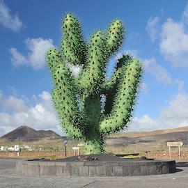 Cactus by Manrique by Tomasz Budziak - Artistic Objects Other Objects ( artistic objects, spain )