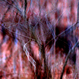 Ghost Trees by Leah Zisserson - Abstract Patterns ( abstract, winter, trees, forest, pink, ghostly )