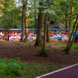 Small train through the forest   by Hurghis Vasile - Transportation Trains ( wooden, green, still life, colors, train, forest, tourism, transportation, travel, discovery, people )