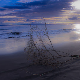 lonely tree by Arie Sanjaya - Landscapes Beaches