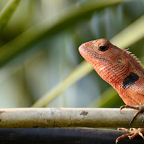 the Lizard by Tom'z Stone - Animals Reptiles