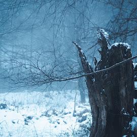 by Vix Paine - Landscapes Weather ( haze, dawn, snow at dusk, fog, snowy, landscape, early morning, mist )
