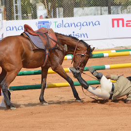 Horse Jump Sport by Kotagauni Srinivas - Sports & Fitness Other Sports ( horse jump sport, horse sports, sport )