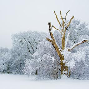 The Golden Bough by Matt Cooper - Landscapes Weather