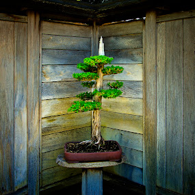 Bonsai Tree by John Souza - Nature Up Close Trees & Bushes