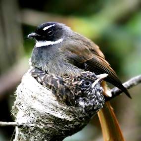 wildlife by Ilham  Eka prasetya - Animals Birds (  )