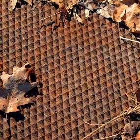 Grate Leaf by John Ogden - Nature Up Close Leaves & Grasses ( cover, oak, leaf, rust, leaves )