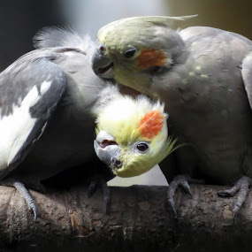 Foreplay by Anumita Das - Novices Only Wildlife ( colour, wildlife, beauty, birds )