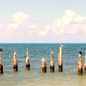 All In A Row by June Morris - Animals Birds ( animals, fla., pilings, birds, key, west,  )