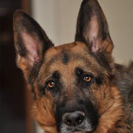 AJK by Beeback AlterEgo Biba - Animals - Dogs Portraits