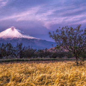 Volcano in the morning by Cristobal Garciaferro Rubio - Landscapes Prairies, Meadows & Fields ( volcano, popo, mexico, puebla, popocatepetl, snowy volcano )