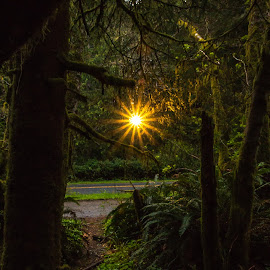 Sunrise Thru The Forest by Kathy Suttles - Landscapes Sunsets & Sunrises