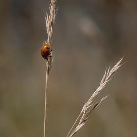 Rustig zittend by Nick Vanderperre - Animals Insects & Spiders ( de korrel nog, 2018, website, natuur, a12-ring )