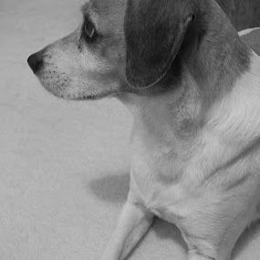 by Alyssa Michlin - Animals - Dogs Portraits