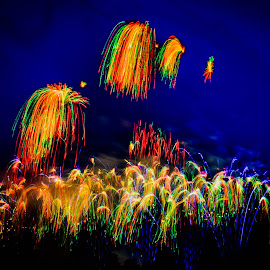 Firework Celebration by Joseph Law - Public Holidays July 4th