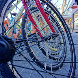 Through the Spokes by Barbara Brock - Transportation Bicycles ( circles, bicycles, bikes, round )