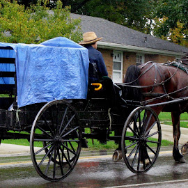 Amish Covered Wagon by Christine B. - Transportation Other ( amish, farmer, horse, covered wagon, rain )