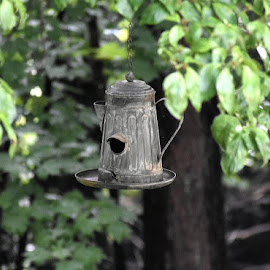A Birds Home by Dana Marshall - Artistic Objects Still Life