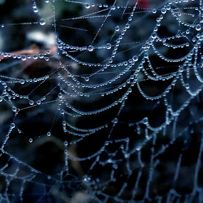 Spider web by Neha Shah  - Abstract Macro